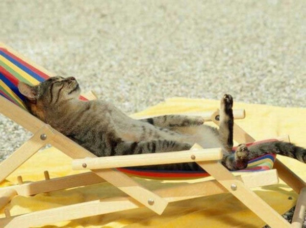 Cat Beach Chair Large Msg 130411204484